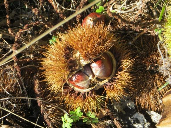 castanet-chestnuts